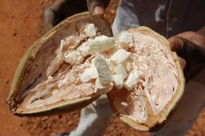 baobab-energie-rentree
